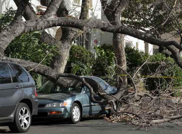 Broken Tree fallen on car
